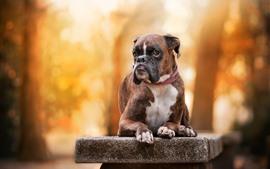 Perro descansando en el banco de piedra