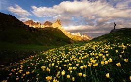 Dolomitas, montanhas, flores amarelas, paisagem natural