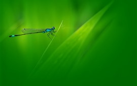 Dragonfly, grass, green background