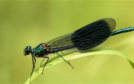 Стрекоза, насекомое, трава, зеленый фон