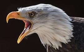 Орел, голова, клюв, черный фон