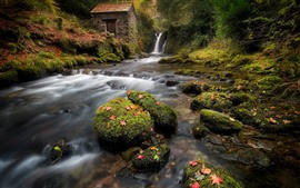 England, waterfall, creek, forest, stones, moss