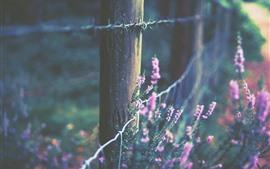 미리보기 배경 화면 울타리, 분홍색 꽃, 흐릿한