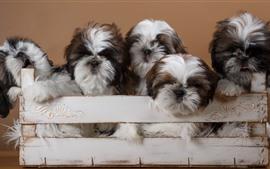 Preview wallpaper Five furry dogs, box