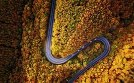 Floresta, curva estrada, outono, vista de cima