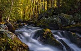 Floresta, angra, pedras, musgo