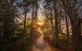 Лес, вершина горы, путь, солнце