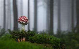 Aperçu fond d'écran Forêt, champignon rouge, herbe
