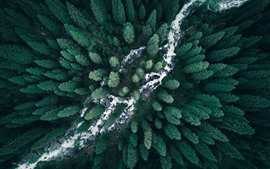 Preview wallpaper Forest, top view, river, nature