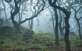 Preview wallpaper Forest, trees, morning, fog