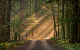 Bosque, árboles, camino, rayos del sol