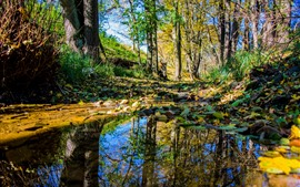 預覽桌布 森林,樹木,水坑,水