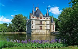 Francia, castillo, flores de color púrpura, agua