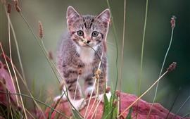 Furry kitten vue de face, herbe