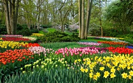 Preview wallpaper Garden flowers, daffodils and tulips