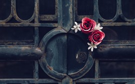 Preview wallpaper Gate, rose, rusty