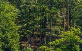 Alemanha, floresta negra, verde, verão