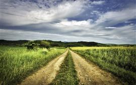 Preview wallpaper Grass, fields, path, summer