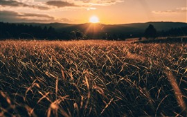 Grass, fields, sunrise