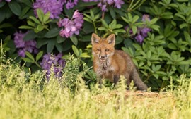 Preview wallpaper Grass, fox, flowers