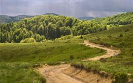 Grama, estrada, floresta, nuvens