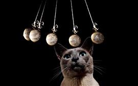 Olhar cinzento do gato no pêndulo, fundo preto