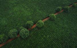 Campos verdes, caminho, árvores, vista superior