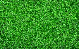 Preview wallpaper Green grass, meadow, summer