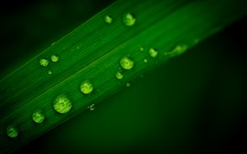 Preview wallpaper Green leaf, after rain, water droplets