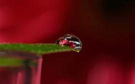 Hoja verde, gota de agua, flor