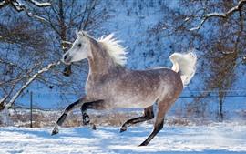 壁紙のプレビュー 馬の走り、冬、雪、木