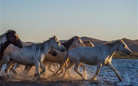 Preview wallpaper Horses walking in the water