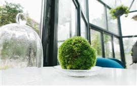 Houseplants, green ball