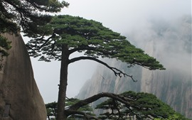 Preview wallpaper Huangshan, pine tree, cliff, fog, China