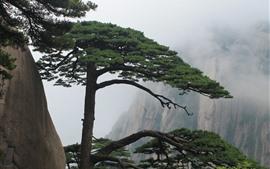 壁紙のプレビュー 黄山、松、崖、霧、中国
