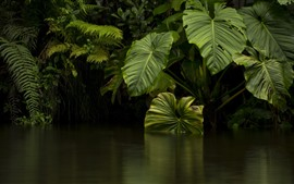 Preview wallpaper Jungle, green leaves, river, water