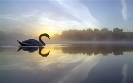 Preview wallpaper Lake, swan, trees, fog, morning