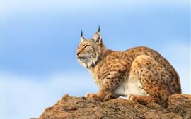 Preview wallpaper Lynx, rocks, blue sky