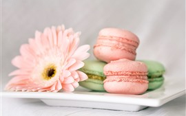 Preview wallpaper Macaron, pink gerbera