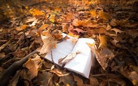 Hojas de arce, libro, suelo