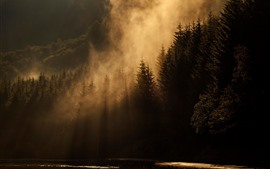 Morning, forest, fog, sun rays
