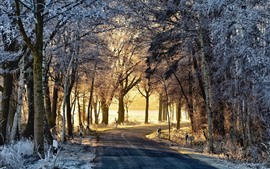 Manhã, estrada, árvores, geada, inverno