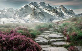 Preview wallpaper Mountains, grass, flowers, snow, fog