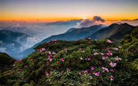 Preview wallpaper Mountains, top, flowers, fog, morning, clouds, sunrise