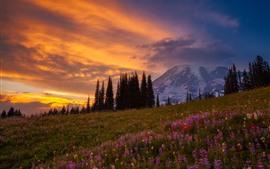 Montagnes, fleurs sauvages, nuages, ciel, crépuscule