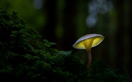 Preview wallpaper Mushroom, forest, darkness