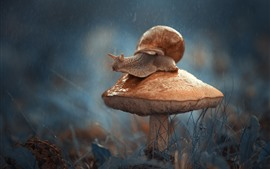 Preview wallpaper Mushroom, snail, insect, rainy