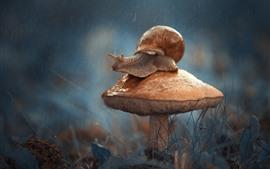 Cogumelo, caracol, inseto, chuvoso