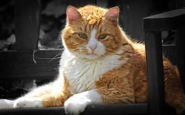 Orange white cat, sunshine