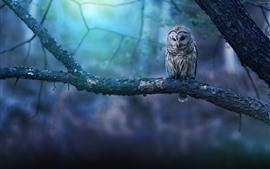 Owl in the forest, bokeh